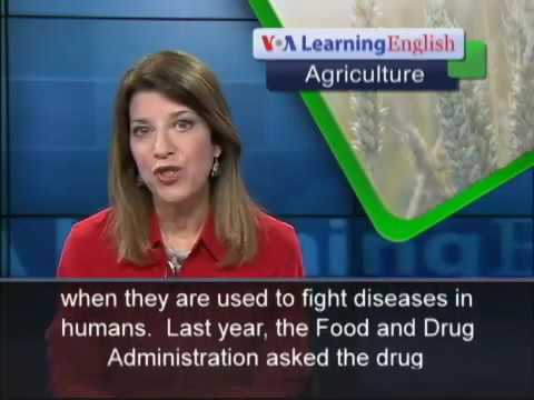 US Officials Want Farmers to Use Less Antibiotics
