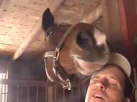 Horses & Rabbits