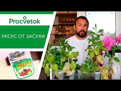Полив огорода. Уникальный способ полива томатов, перцев, огурцов. Использование 9% уксуса от засухи.