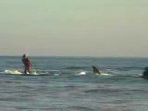 Thumbnail of video Shark surfer