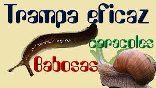TRAMPA muy EFICAZ para BABOSAS y CARACOLES/ El ratillo de Juan Valentín