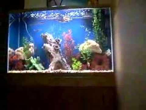 Shakes 50 gallon high fish tank youtube for 50 gallon fish tank hood