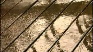 Watch Kenny Wayne Shepherd Everytime It Rains video