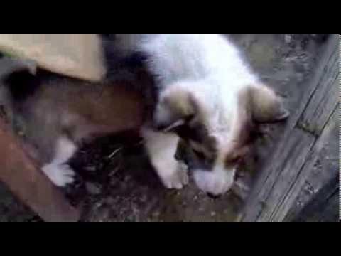 Милый щенок(Cute puppy)