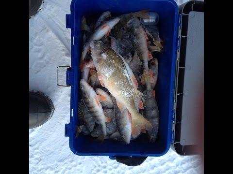 Рыбалка по первому льду ноябрь 2016, поехали за большим ОКУНЕМ залив Тарма, Иркутская область