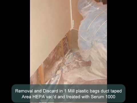 Mold Remediation Documentation Project 2