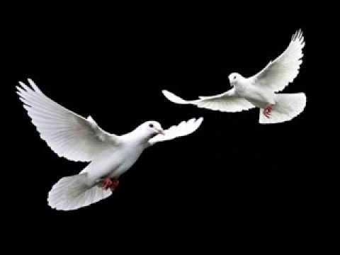 Şehadet Güvercini-Grup Özlem (Sitemli Yüzüm Benim-ŞEHADET GÜVERCİNİ)]