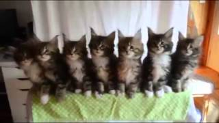 Funny Animals Dancing to Music
