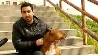 Download Reportage Psyco-M 2012 _ Tunis Apres La Revolution sous-titres français 3Gp Mp4