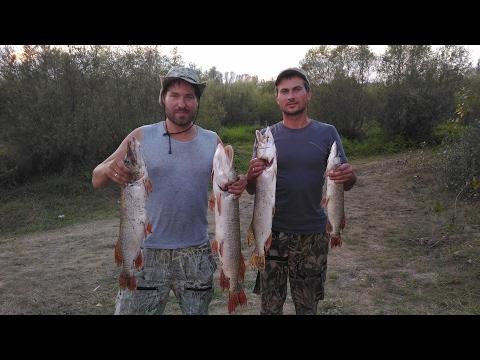рыбалка в омской области видео на щуку