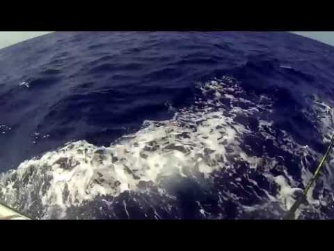 The Lazy Marlin - Bull Dolphin Port Everglades offshore fishing Fort Lauderdale