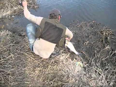 ловля сетями в тайге видео