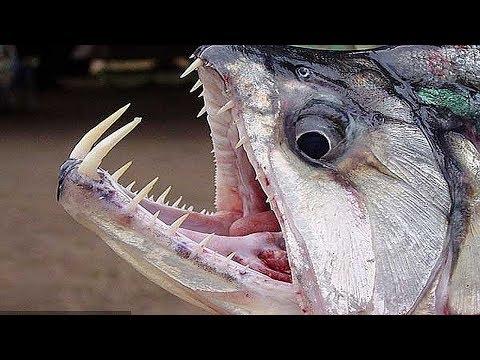 РЫБАКИ НЕ ПОНЯЛИ ЧТО ЭТО ЗА РУСАЛКА МОНСТР РУСАЛКА ОЧЕНЬ БОЛЬШАЯ РУСАЛКА Вот это рыбалка 2018