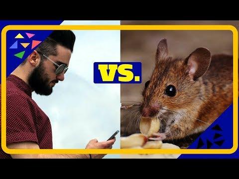 Bist du so MANIPULIERBAR wie eine RATTE?!  Klassische Konditionierung | Psychologie | Handysucht