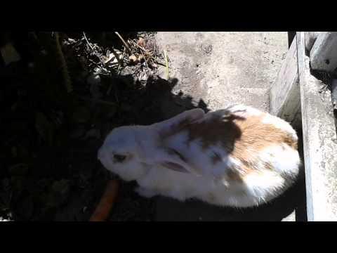 Bunny Carrot Cake Carrot Eating Bunny