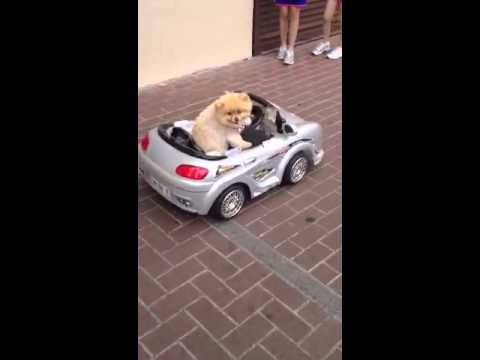 Cats Driving Cars Images