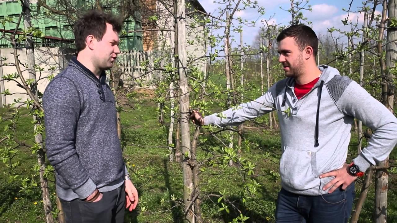 forum sadownicze, uprawa jabłek, gorzka plamistość, wapń w roślinach dowiedz się o co chodzi