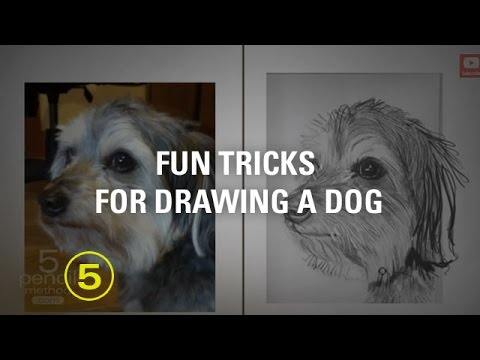 Tips on drawing a dog
