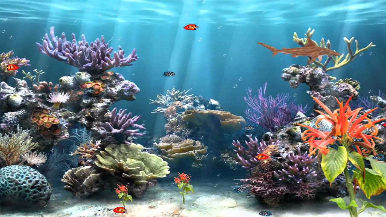 3d aquarium fish tank background feature rock - Coral Reef Aquarium Animated Source
