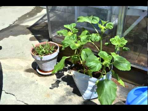 home garden organic vegetable greenhouse system