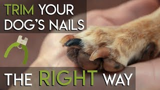 How to Trim Your Dog's Nails - The RIGHT Way