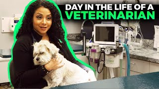 Day in the Life of a Veterinarian