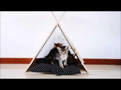 Jak Zrobić Drapak I Namiot Dla Kota? #mamawdomu