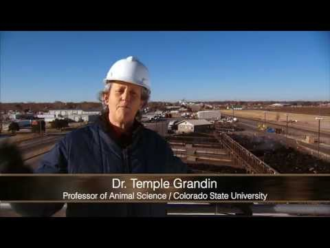 Video Tour Of Beef Plant Featuring Temple Grandin video