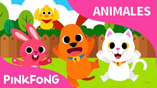 Animales Bebé | Animales | PINKFONG Canciones Infantiles