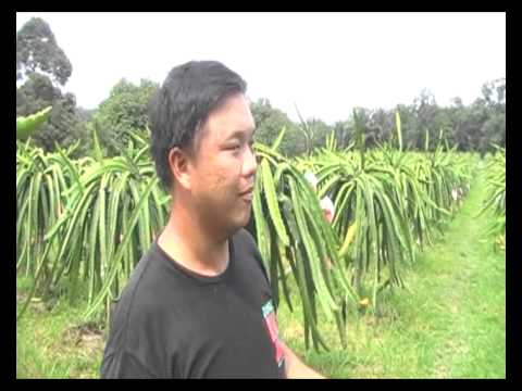 Bio Fertilizer for Dragon Fruit in Ayer Hitam, Malaysia