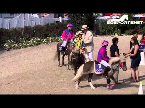 Shetland Pony Race Part 2