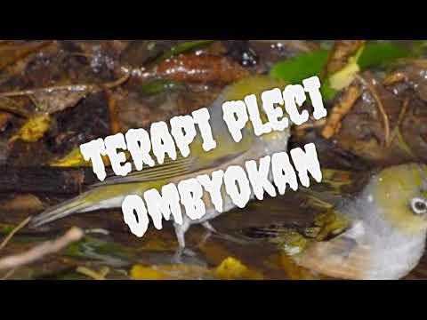 New 2018 Terapi pleci ombyokan