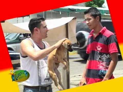 Te Fuiste Tiste - El Perro de Raza