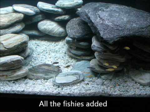 600l malawi cichlid tank stand build and setup with for Aquarium 600l