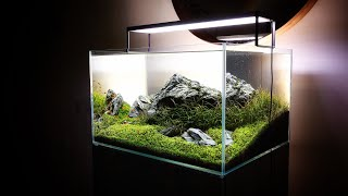BEAUTIFUL Iwagumi AQUASCAPE With Pete (Part 3 Of 3)