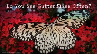 Butterflies are Spiritual Messengers, Here's What They Mean for You