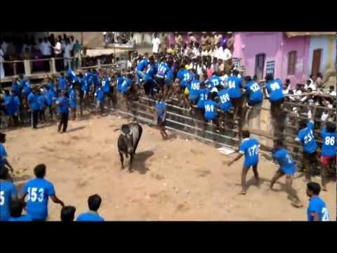 Jallikattu 2012  • Tiruchirapalli • Karungulam video