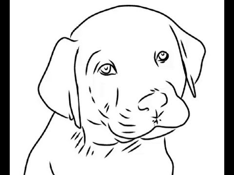Labrador Puppy Drawing How to Draw Cute Labrador