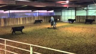 Gisele- Jared Lesh Cowhorses
