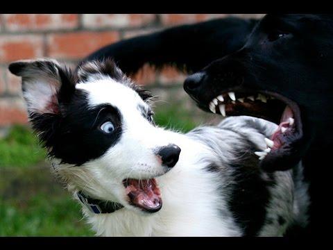 Perros Chistosos y Tiernos 10 minutos, Videos perros Divertidos