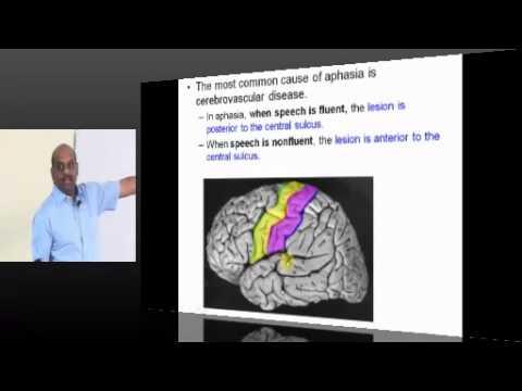 Medicine Neurology Topic 10 Aphasia