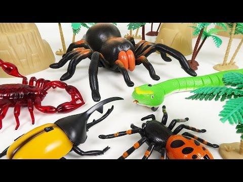 소름끼치게 움직이는 뱀, 거미, 전갈, 장수풍뎅이의 난장판 놀이 - 두두팝토이