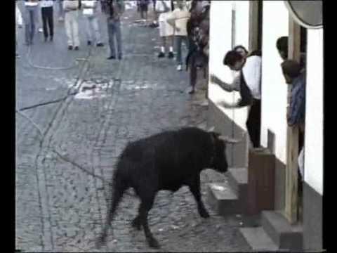 torada mor sarro, sai na rua e dá de cara com o boi....