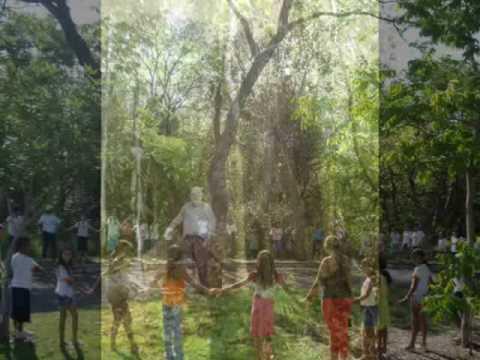 Imagem da capa da música O Grito Da Árvore de Shimba