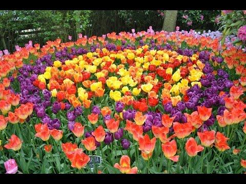 Tulip Time in istanbul tulip feast 2014