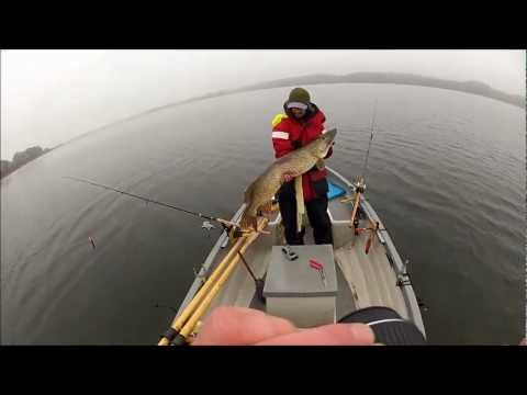 Pike fishing denmark