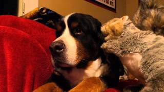 Jax and the Squirrel puppet.