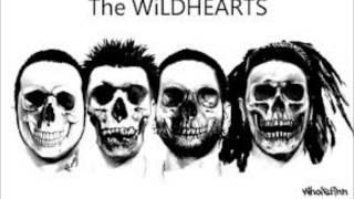 the wildhearts   bi polar baby