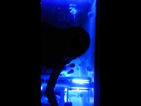 con Angie bailando en la disco