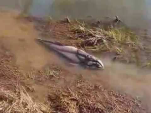 Strange Creatures 2012!! Amazing Video
